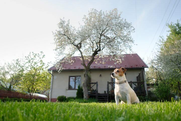 Cómo mantener al perro del vecino fuera de tu jardín