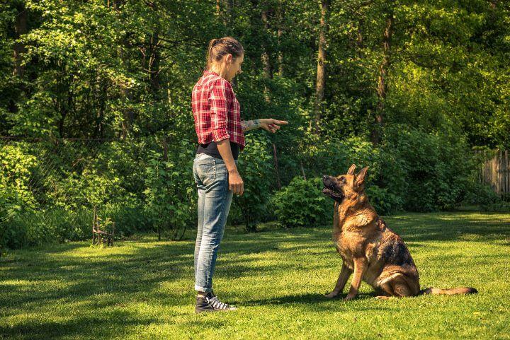 Entrenamiento de un perro